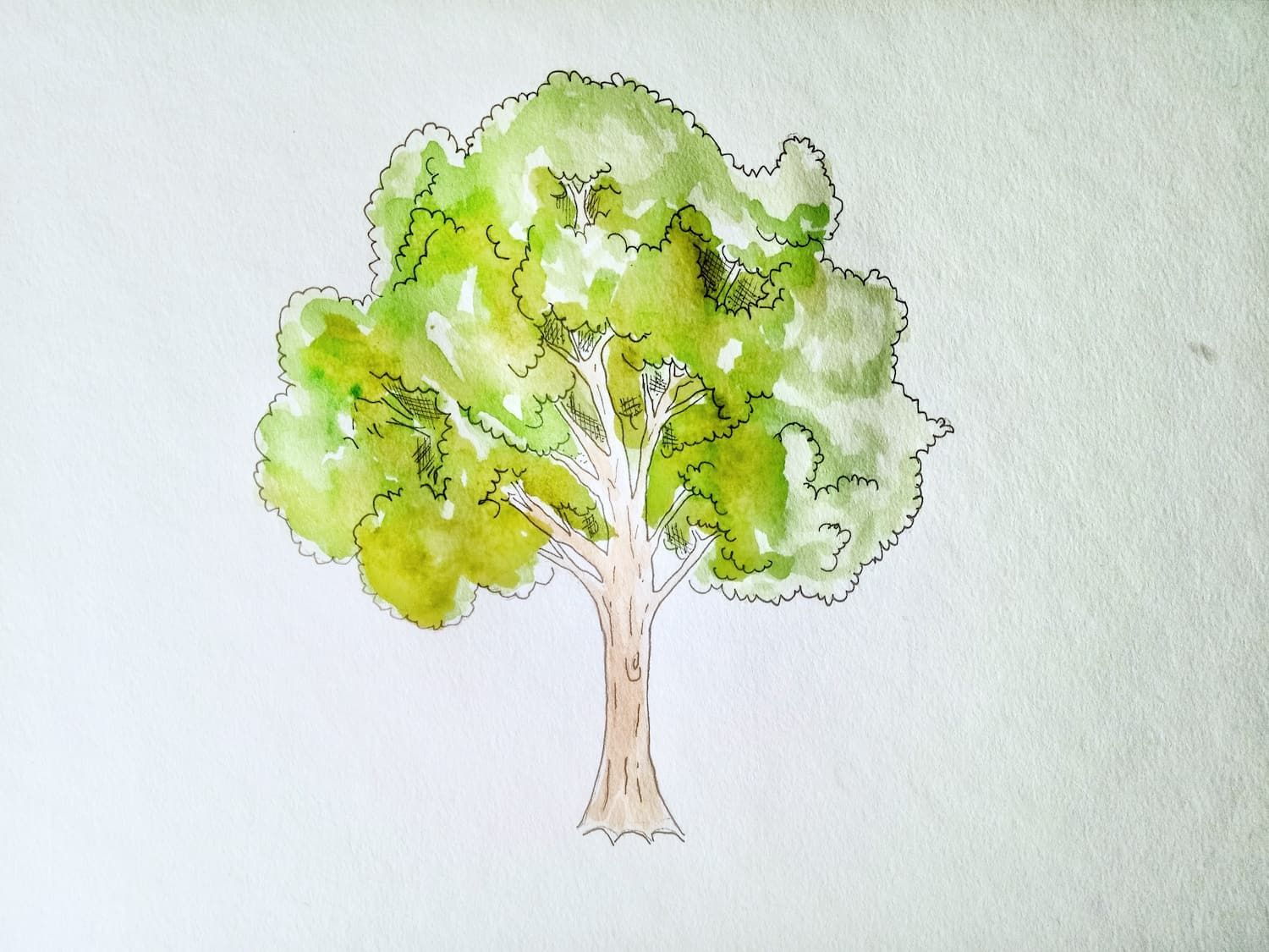 How to draw a tree 6